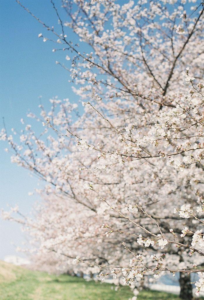 Spring - Spring Has Sprung! TAG