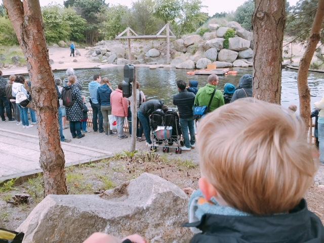 IMG 6753 640x480 - Pretpark bezoeken met je peuter; op naar het Dolfinarium!