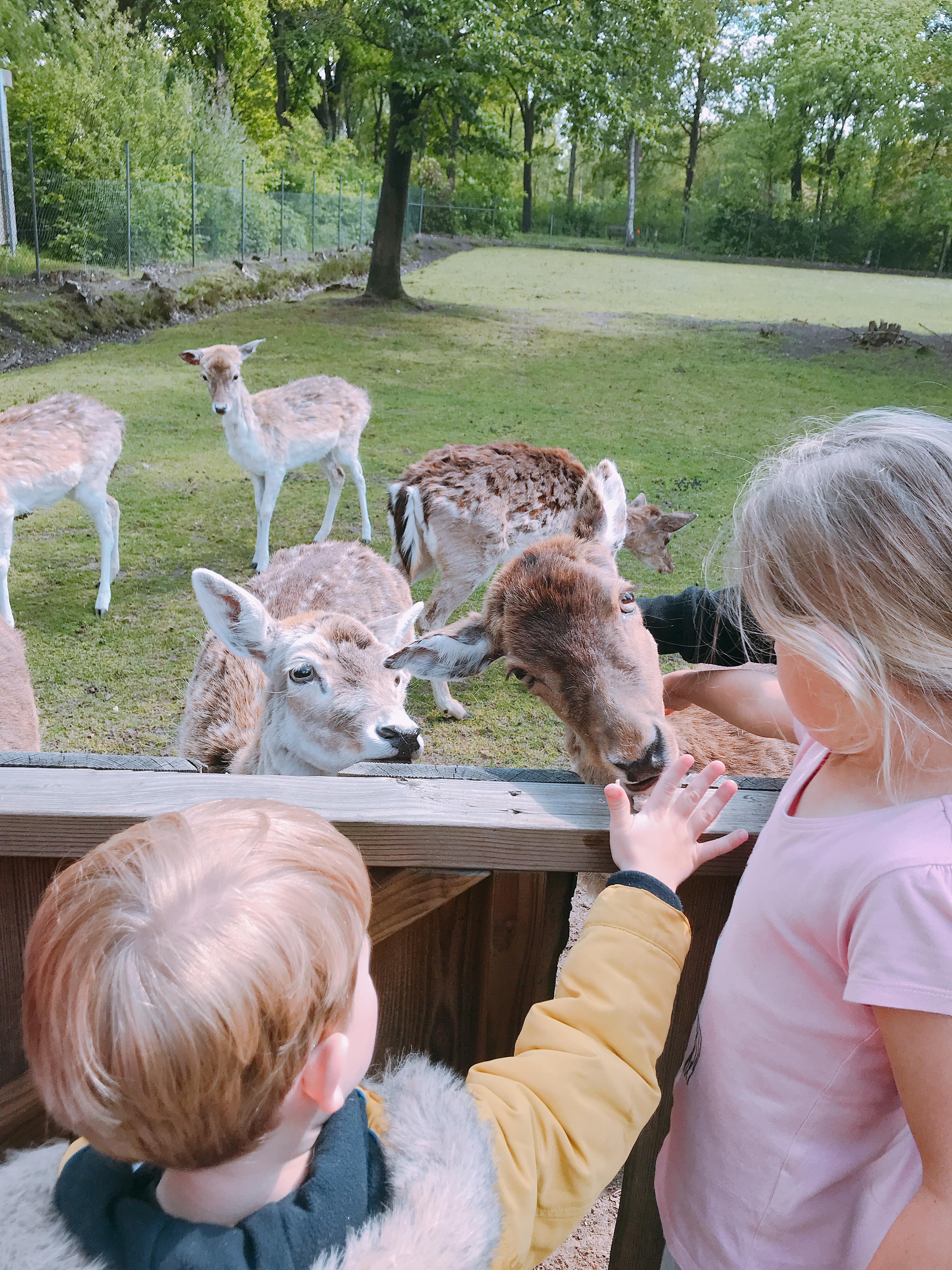 IMG 3082 3024x4032 - 7 x de leukste parken om te bezoeken deze zomer, voor de kleintjes
