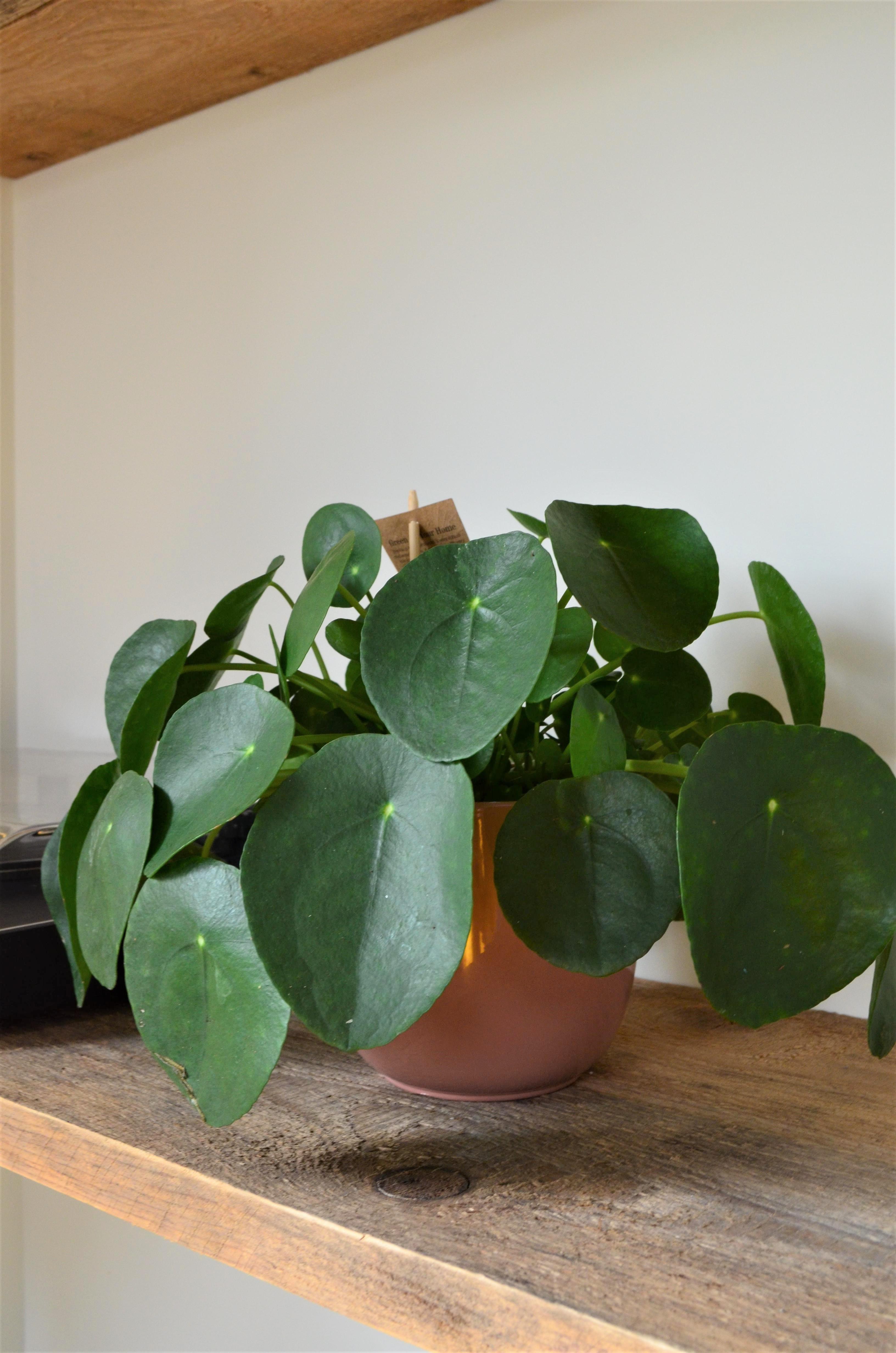 DSC 0253 3264x4928 - Een mini groene make-over in onze woonkamer!