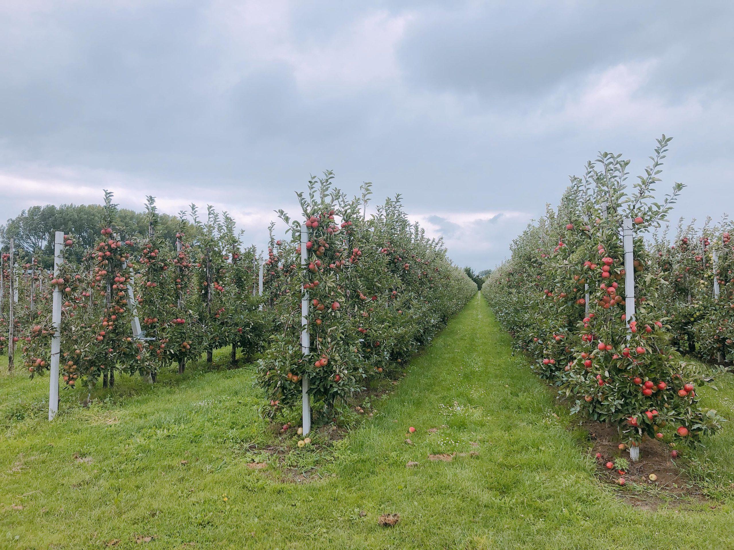 IMG 4001 2880x2160 1 scaled - PLOG - Met z'n viertjes naar de appelboomgaard en het Servero Food Lab!