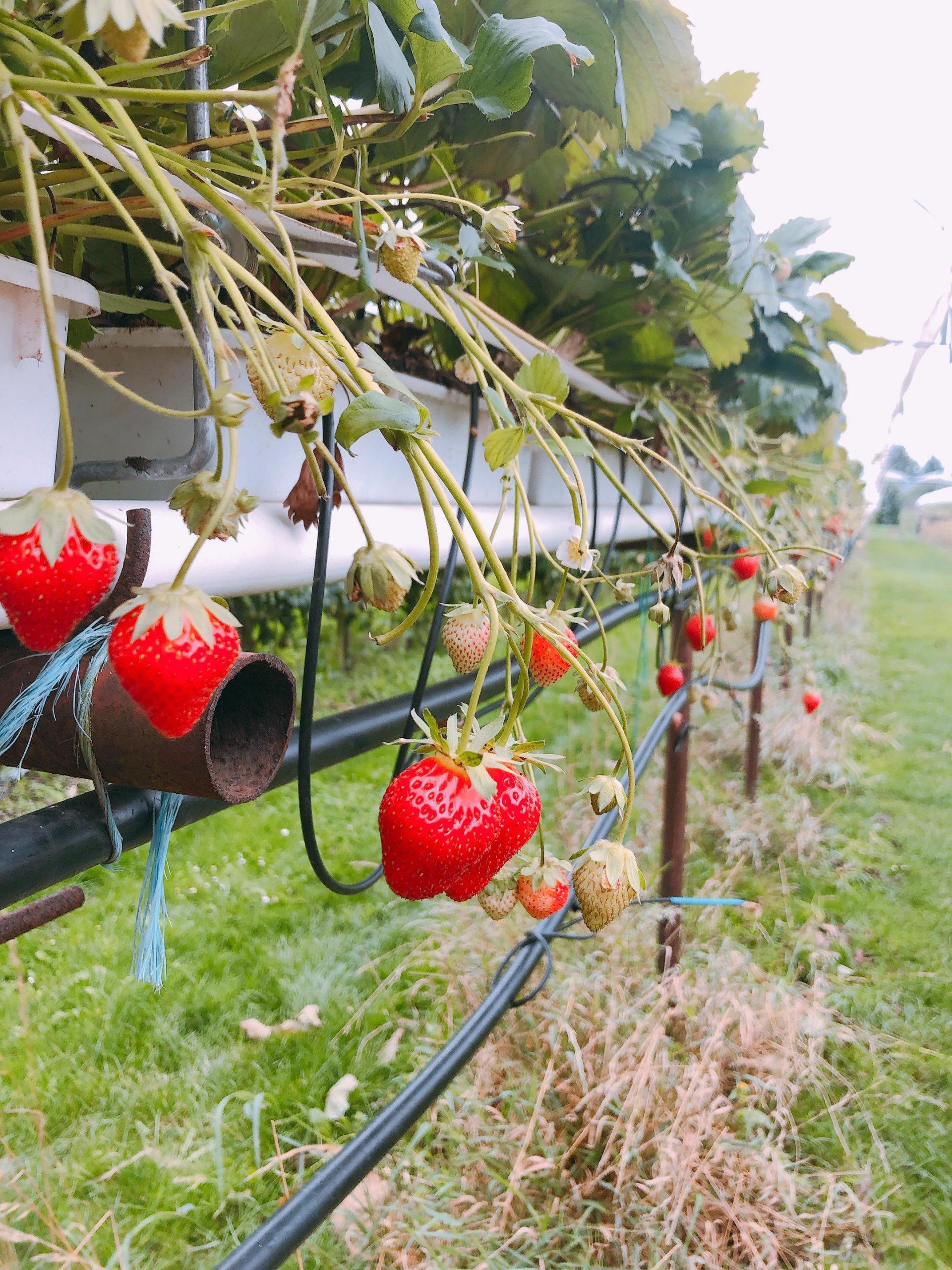 IMG 4064 2160x2880 1 scaled - PLOG - Met z'n viertjes naar de appelboomgaard en het Servero Food Lab!